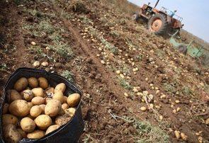 برباد دادن دسترنج کشاورزان گلستان