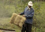 بیش از۴۰ درصد گندم تولیدی مازاد نیاز استان است
