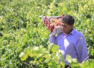 راه نجات پیشرانه اقتصاد کشاورزی قراردادی
