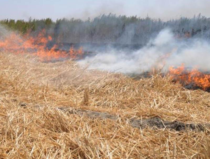 هشدار به آتشسوزی در گندمزارها