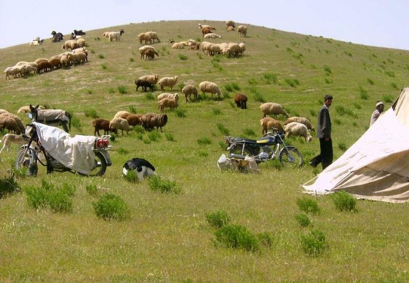 شناسنامه دارشدن۲۴درصددامهای خراسان شمالی