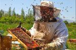 رشد۱۰درصدی تولیدعسل درشهرستان مرزی راز و جرگلان