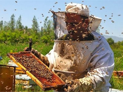 افزایش۳برابری تولیدعسل
