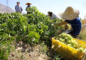 عدم وجود تشکل عامل ضعف مدیریت کشاورزان