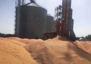 تحویل حدود ۱۲۷ هزار تن گندم به سیلوهای خراسان شمالی