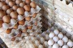 حلقه گمشده درتوزیع تخم مرغ