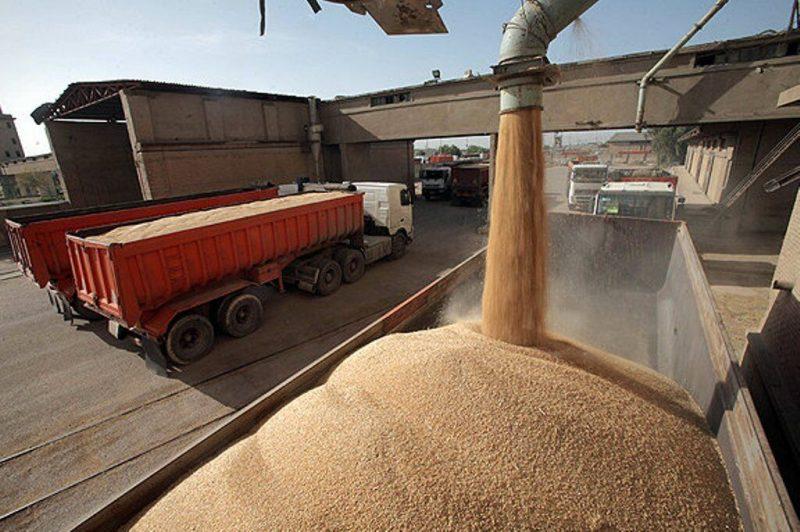 ورود۳۵۰۰تن گندم بندری به استان