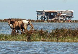 آیا فاجعه زیست محیطی دوباره تکرار میشود؟