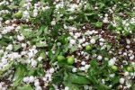 خسارت ۸۵۰ میلیارد تومانی حوادث غیرمترقبه در سال گذشته به کشاورزی آذربایجان غربی