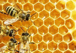 افزایش ٢برابری تولید عسل در نیکشهر