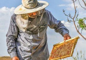 ۲۸۰۰ تن عسل در لرستان تولید شد