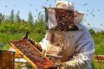 تولید۲۴۰ تن عسل در شیروان