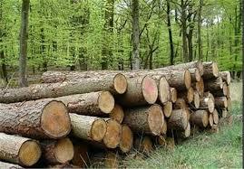 زراعت چوب یک تیروچندنشان
