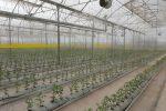 ارتقاءچهار برابری صنعت گلخانهای