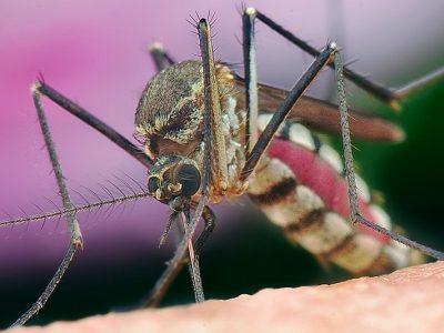نبرد قاطع با مالاریا