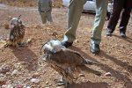 کوخت پرنده شکاری دربندرگز