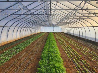 راهاندازی نخستین گلخانههای مرزی روتک خاش