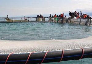 بومیسازی تکنولوژی پرورش ماهی در قفس در ایران