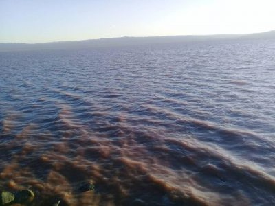 آبگیری تالاب کجی نمکزارنهبندان