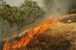 ادامه تلاش برای مهارآتش جنگل هیرکانی گلستان