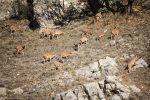 آغازسرشماری پاییزه حیات وحش پارک ملی