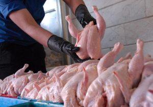 ثبات قیمت مرغ دربازار