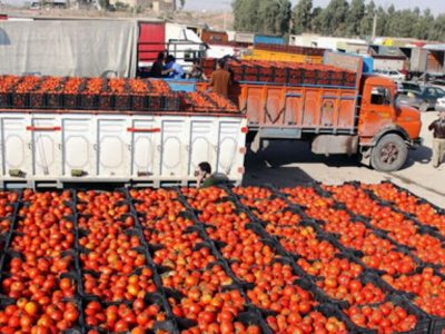 علت معدوم گوجههای برگشتی ازعراق چیست؟