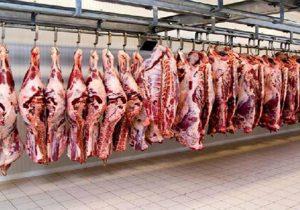 ۱.۵برابرشدن تولید گوشت قرمز