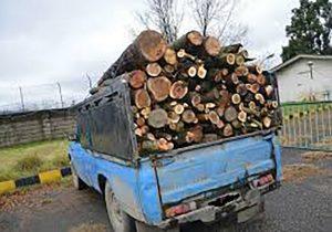 قاچاق چوب،آفتی برجان جنگلها