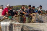کاهش ۴۲ درصدی صید در سواحل گیلان