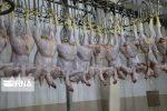 دیماه امسال روزانه حدود۵۷ تن مرغ در چهارمحال و بختیاری کشتار شد