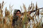 ۲۴ شکارچی در خراسان جنوبی قبل از شکاردستگیر شدند