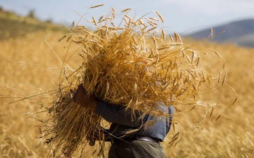 خشکسالی تولیداتکشاورزیخلخال را۵۰درصد کاهشداد