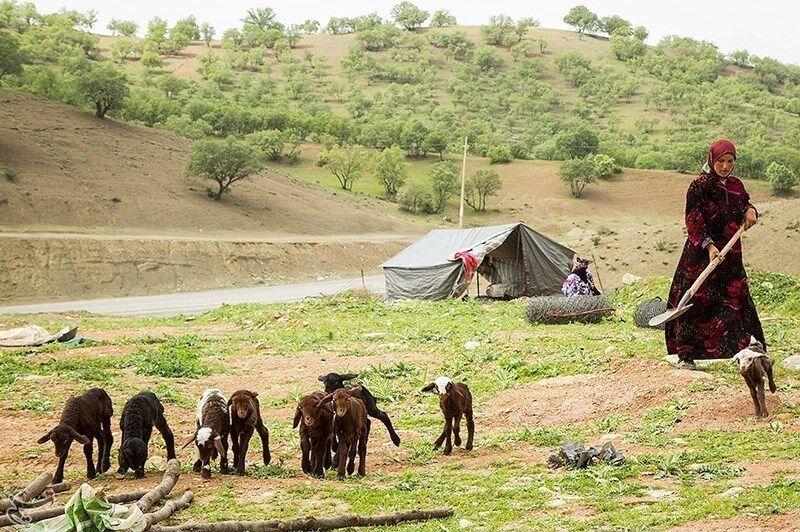 خشکسالی،۶۷میلیاردتومان بهمراتع عشایراستانبوشهر خسارتزد