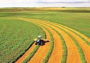 تولید۱۰درصدبذراستان توسط گندمکاران خراسان شمالی