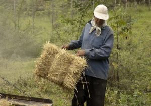 افزایش خرید گندم وخیز جهادکشاورزیبرایآن