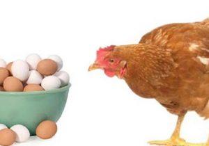 ارزانی مرغ و تخم مرغ در هفته آتی