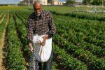 توزیع ۴۱۲۸ تن کودشیمیایی بین کشاورزان چهارمحال و بختیاری