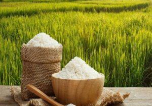 بررسی پرونده برنج مازندران برای رفتن به بورس کالا