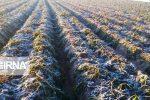 برآورد۱۹۶۳ میلیارد ریالی زیان سرما به محصولات کشاورزی فسا