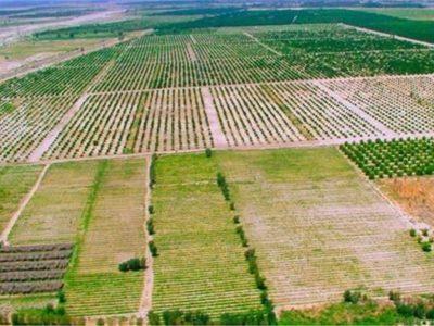 کشاورزی ظرفیتی برای اشتغال جوانان گلستان