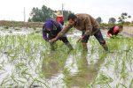 حذف ممنوعیت کشت برنج در۴۰۰هکتارشالیزارخراسان شمالی