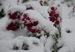 زمستانی شدن هوای خراسان شمالی بانخستین برف بهاری