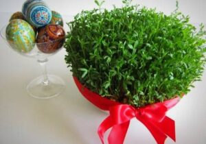 کاشت سبزه عیدنوروزبا عدس