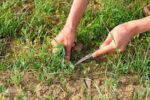 ممنوعیت برداشت گیاهان خوراکی طبیعی در ایلام