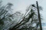 جمع آوری چادرنشینان به علت وزش باد شدید چادرهای خود را در ایلام