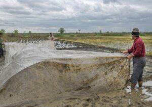 ایجاد نخستین خزانه برنج سال ۱۴۰۰ در آستارا