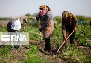 تصویب سند توسعه اشتغال روستاهای تهران