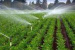 آبگیری بیش از۵۶ هزار هکتار از اراضی کشاورزی منطقه سیستان