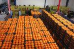 جذب ۷۵۰تن میوه تنظیم بازار عید برای سیستان و بلوچستان
